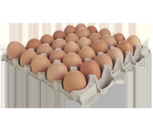 wholesale free range eggs